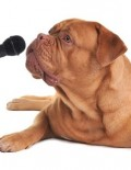 dog w:microphone