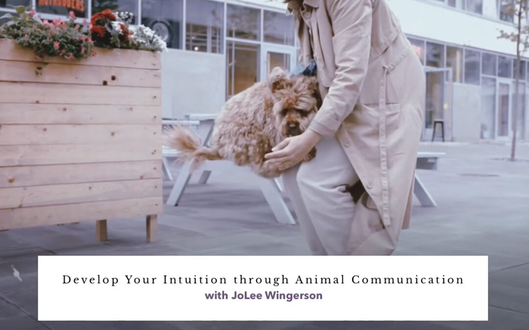 Develop Your Intuition through Animal Communication with JoLee Wingerson – RECORDING AVAILABLE!